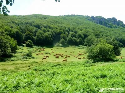 Sierra Toloño,Rioja Alavesa; excursiones singles campos lavanda rutas por los arribes del duero
